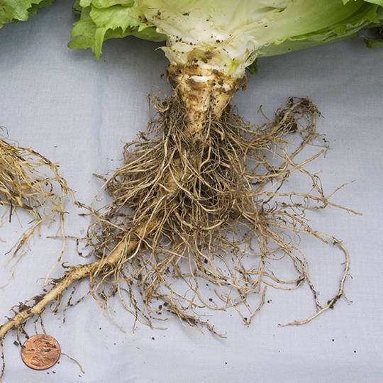 Root Rot  Causes, Symptoms, Prevention, And Control. Emergency Dentist New York City. Civil Engineer Jobs In Dubai. Houston Sheriff Department Msp Cloud Services. Promotional Sports Bags Cbs Channel On Uverse. Certified Medication Aide Classes Online. Salary Of An Orthodontist Lamay Tree Service. Treatment Options For Asthma. Truck Driver Jobs In Colorado