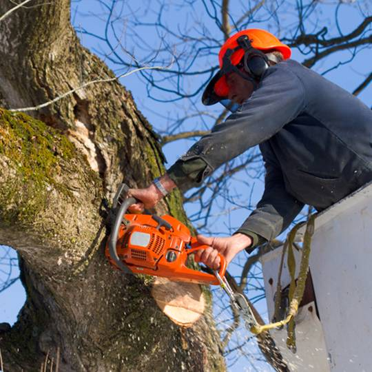 How to Save Money on Tree Removal