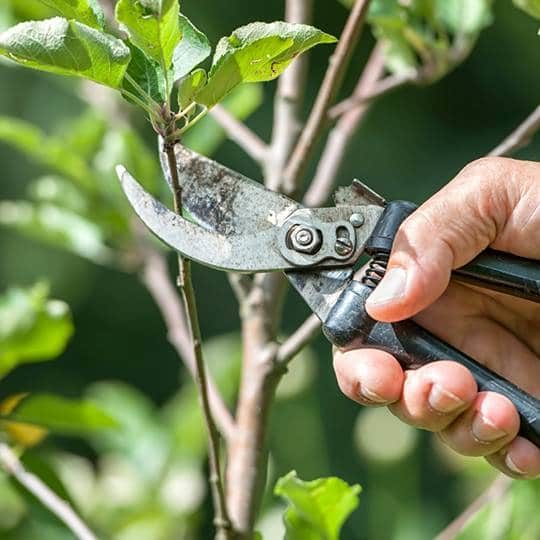 Why We're into Summer Tree Pruning, and You Should Be Too