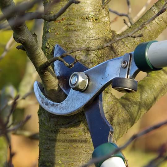 Spring Tree Pruning
