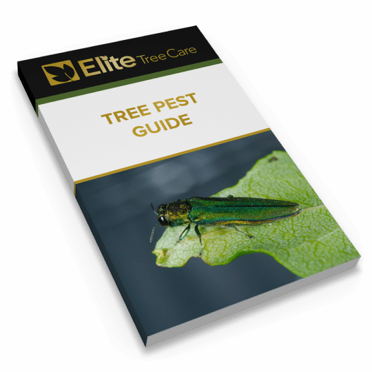 Tree Pest Guide