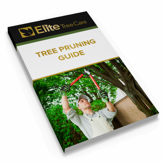 Tree Pruning Guide