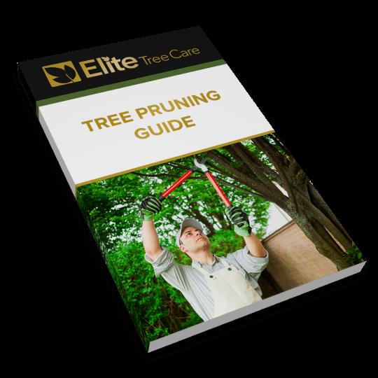 Tree Pruning Guide