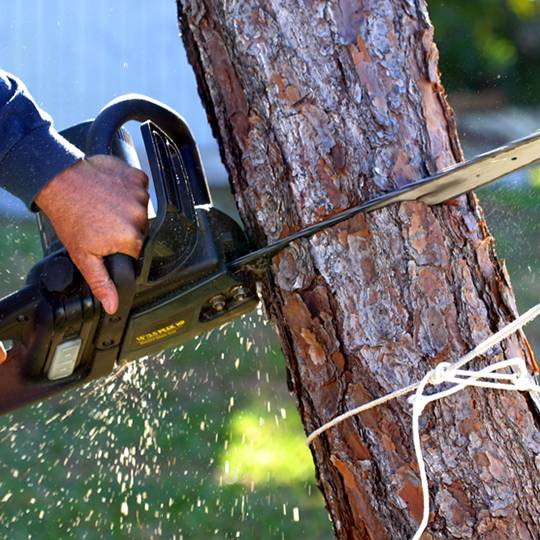 6 Tips for Tree Removal Safety