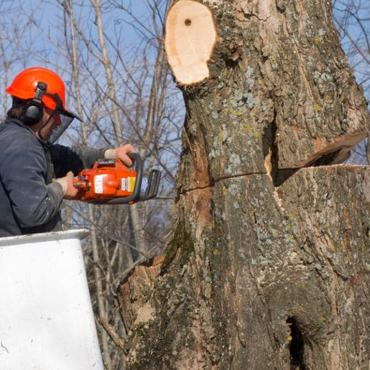 Tree Trimming: 5 Reasons to Hire the Pros