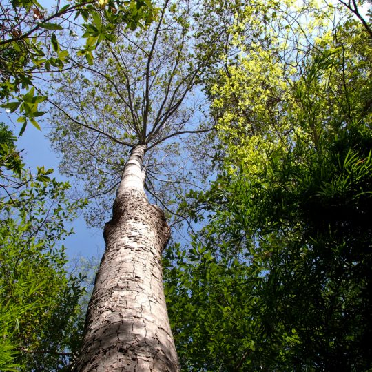 Five Reasons to Leave a Dying or Dead Tree