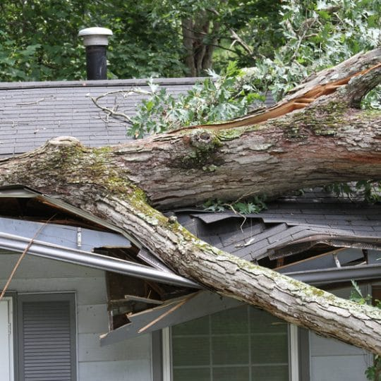 Storm Damage: 3 Tips to Handle Broken Limbs, Injured Trees