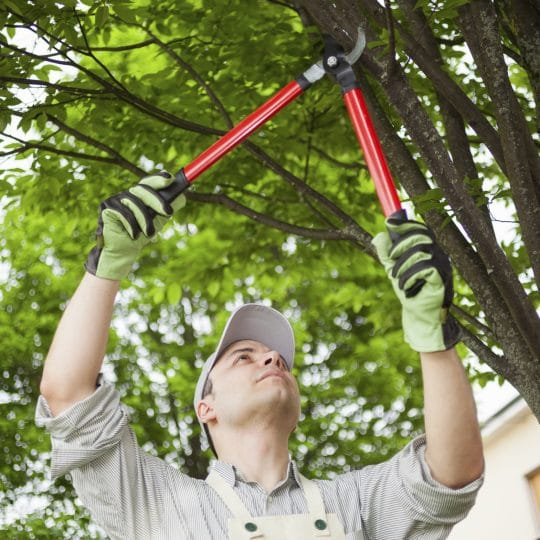 Tree Pruning for Property Managers: 4 Ways That Pruning Boosts Profits