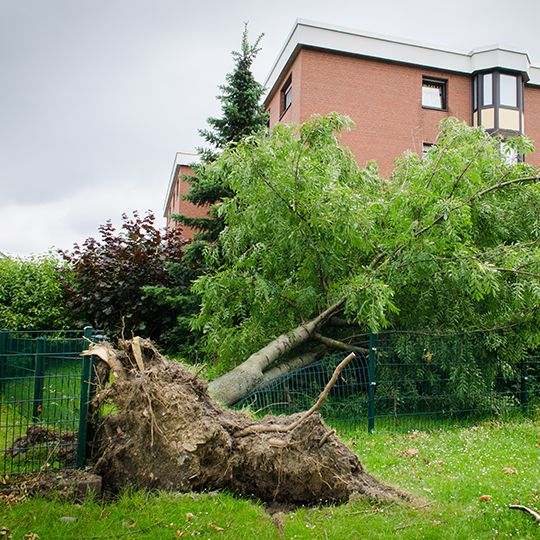 Emergency Tree Services: We're Always On-Call
