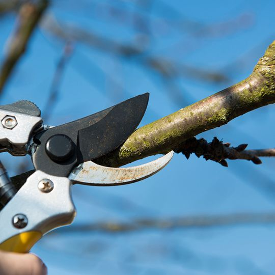 Three Mistakes to Avoid When Winter Tree Pruning