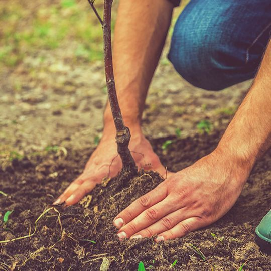 Soil Care Equals Healthy Tree Growth