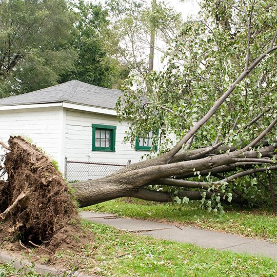 Five Reasons for Tree Removal