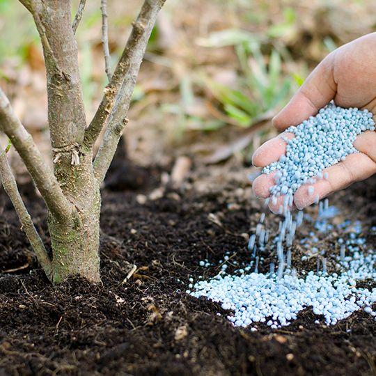 Deep Root Fertilization: Learn the Benefits
