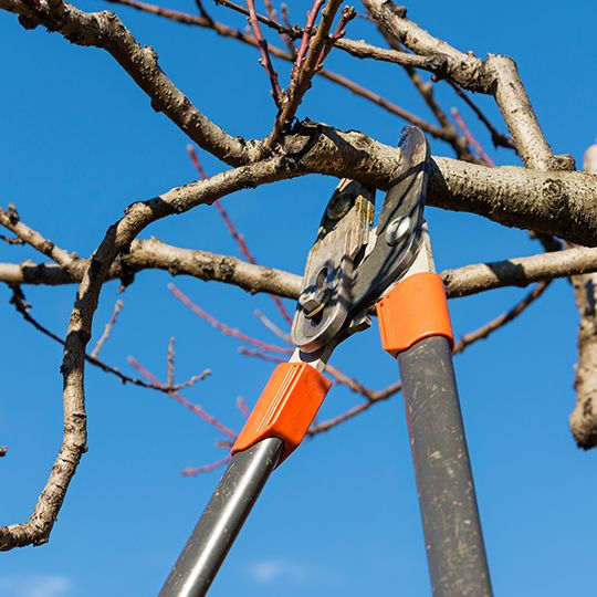 Four Common Myths About Tree Trimming and Pruning