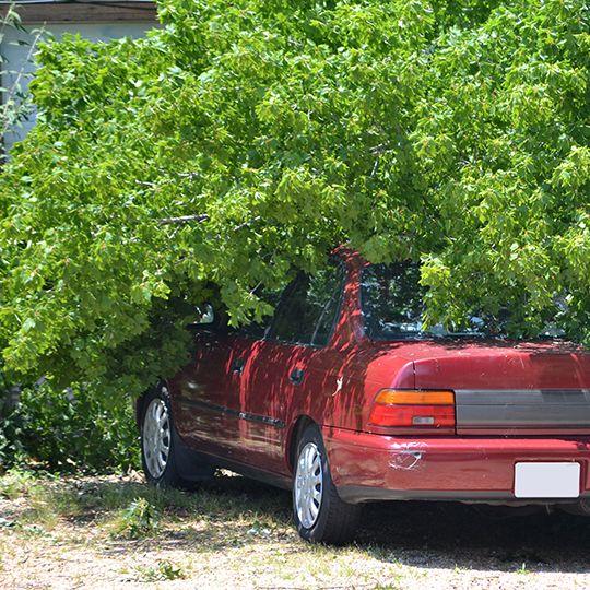 Hazards of DIY Tree Removal