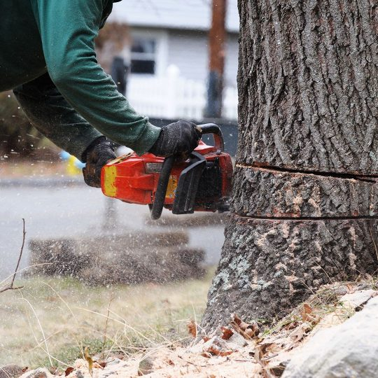 How to Estimate the Cost of Tree Removal