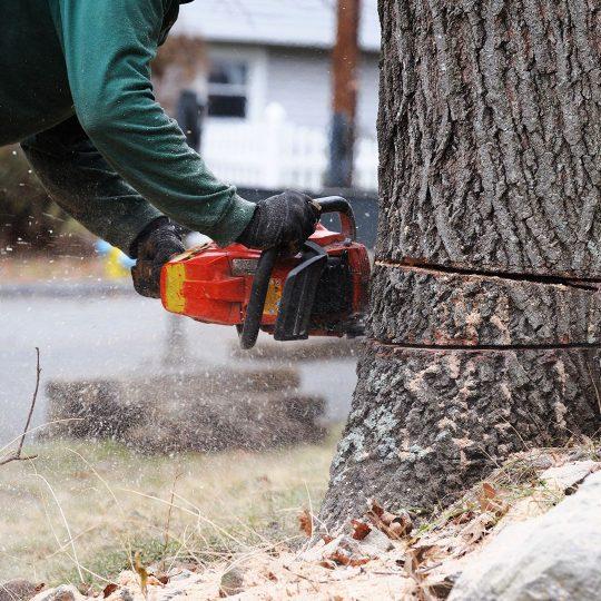 DIY Tree Removal