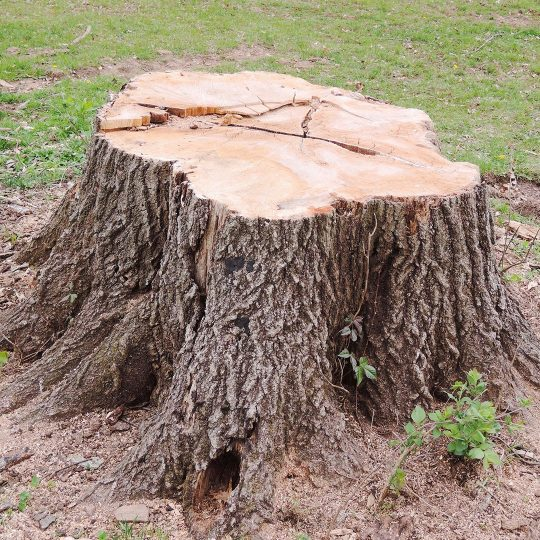 Tips for DIY Stump Removal