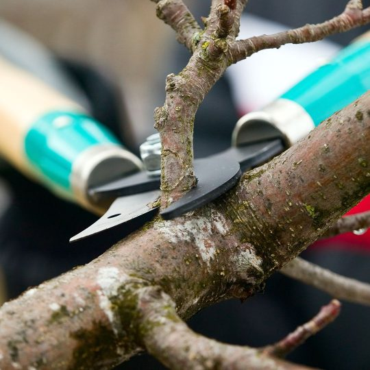 Summer Tree Pruning Techniques
