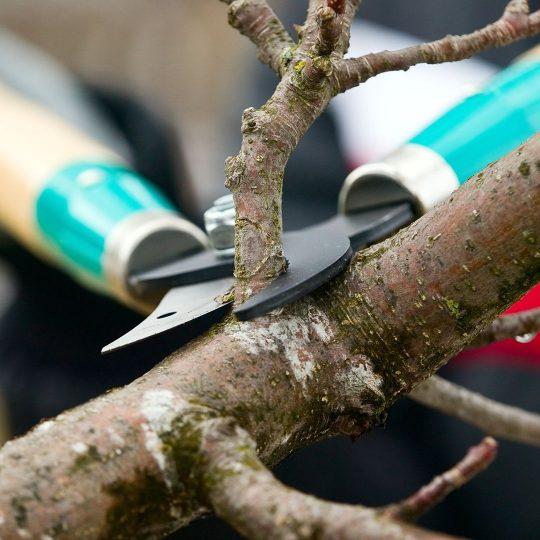 Stop Pruning Trees