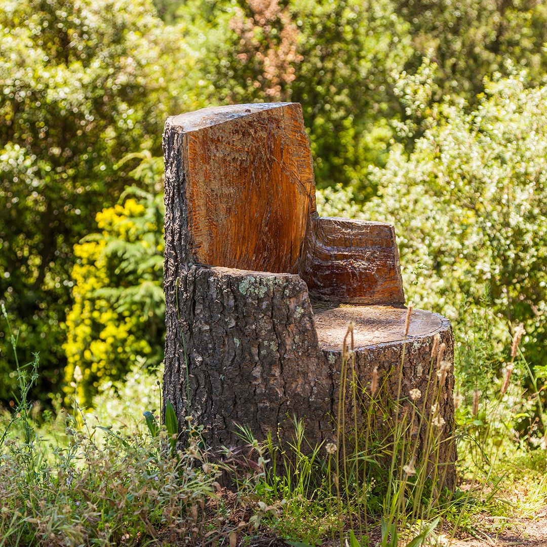 Creative Uses for a Tree Stump | Elite Tree Care