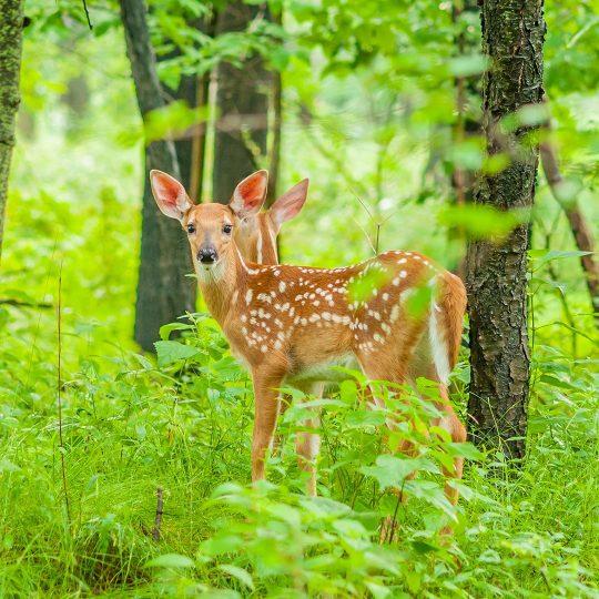 Pet-Friendly Deer Repellents