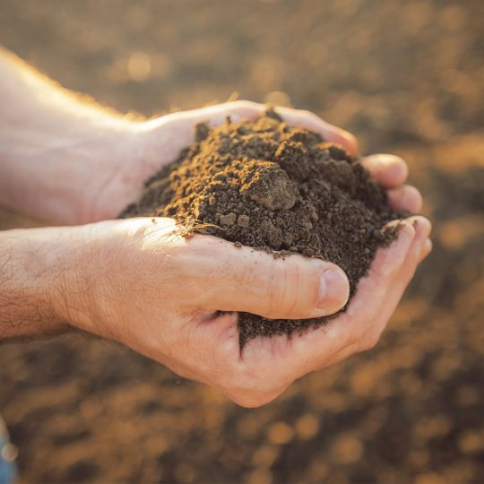 How to Improve Poor Soil Quality