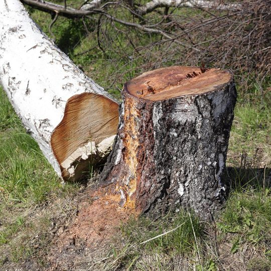 DIY Small Tree Removal