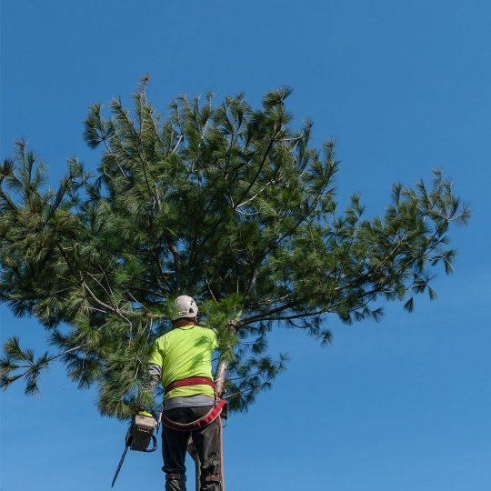 Reasons for Spring Tree Removal