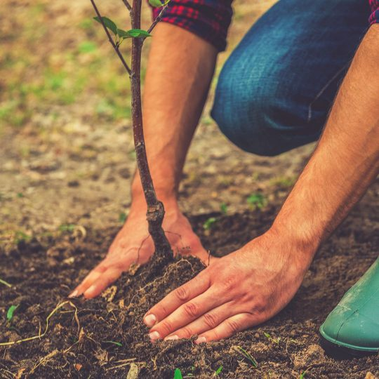 Proper Tree Planting Tips