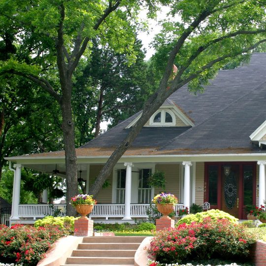 Should You be Concerned about Branches Over the Roof