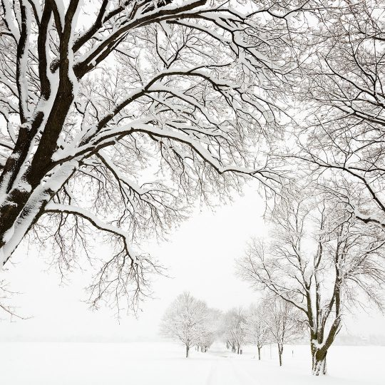 Snow on Trees: Pretty or Problematic?