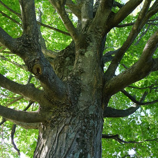 Promoting Healthy Tree Growth