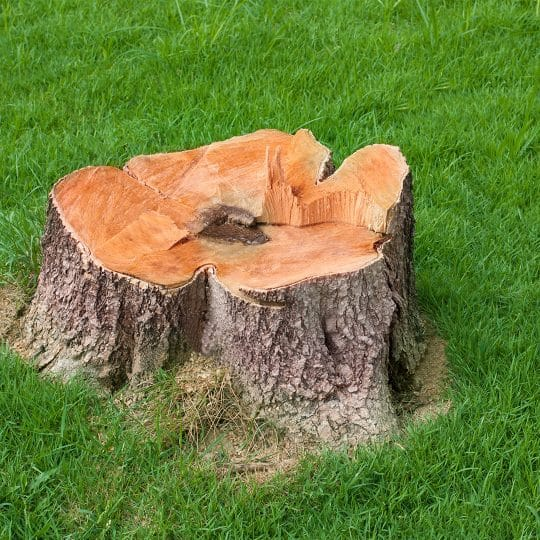 Stump Removal Process