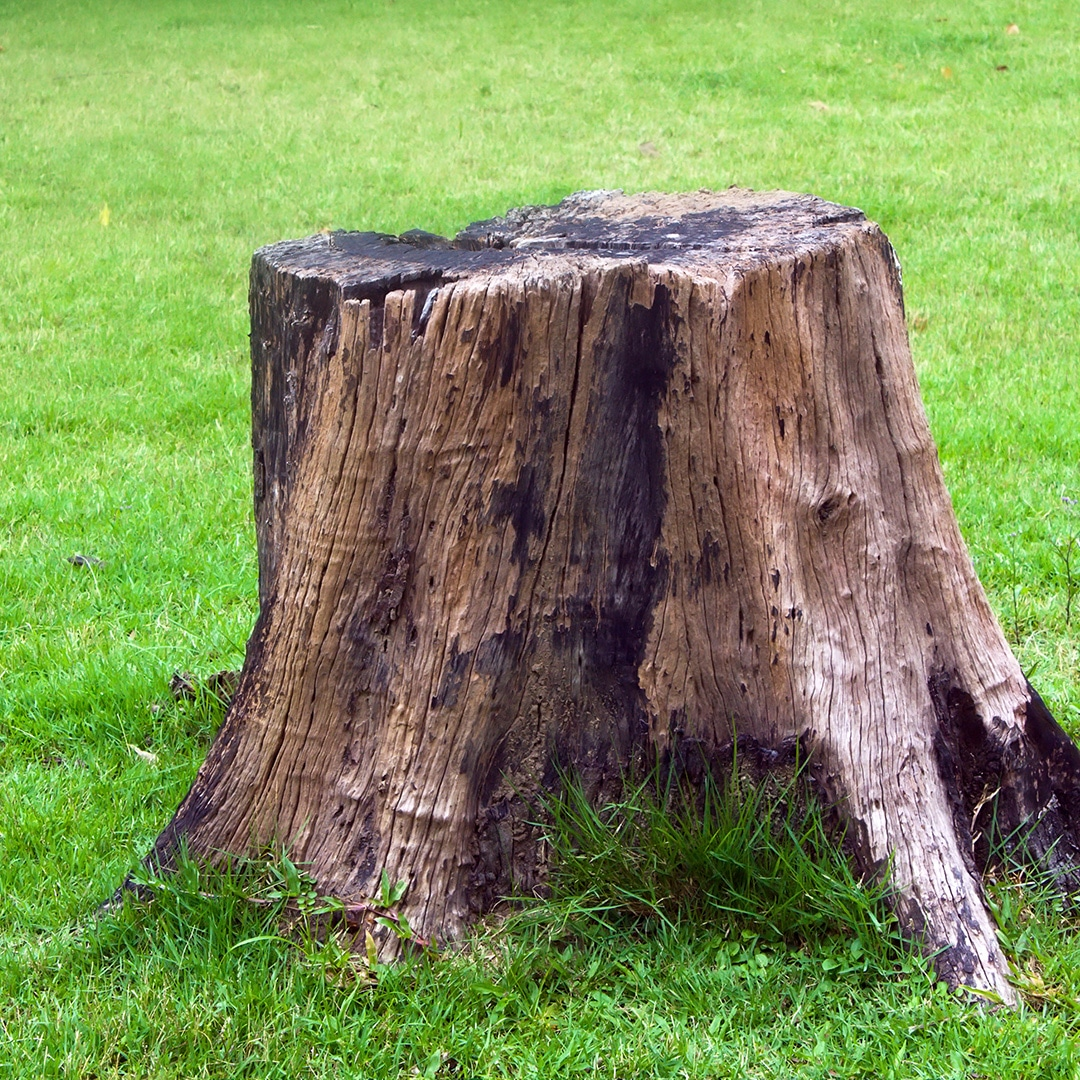 What To Do With A Tree Stump Elite Care