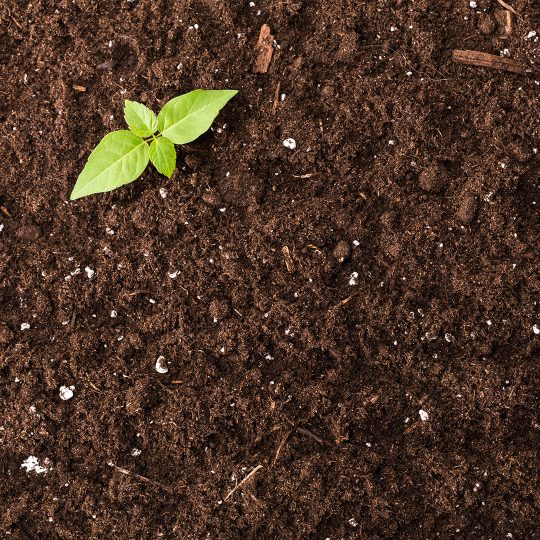 Improving Poor Soil Quality