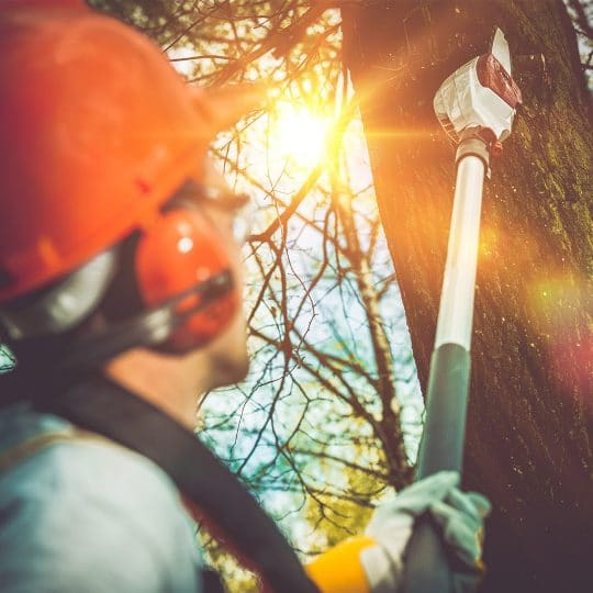 What to Look for in a Tree Removal Company