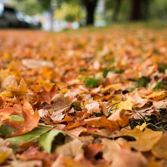 Early Leaf Drop Reasons