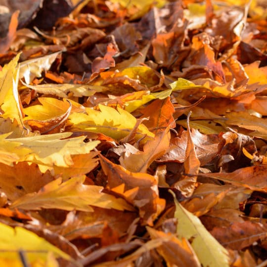 7 Uses for Autumn Leaves