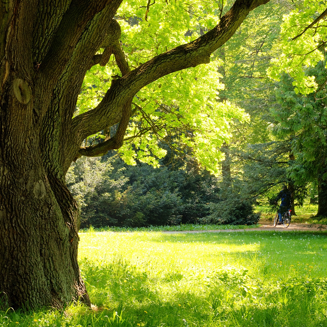 3 Signs Of Healthy Tree Growth Elite Tree Care