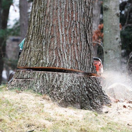 Tree Removal Timetable Estimate