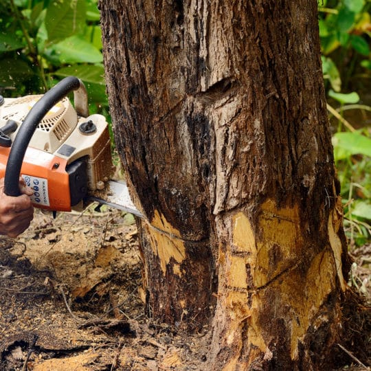 Estimating Tree Removal Costs