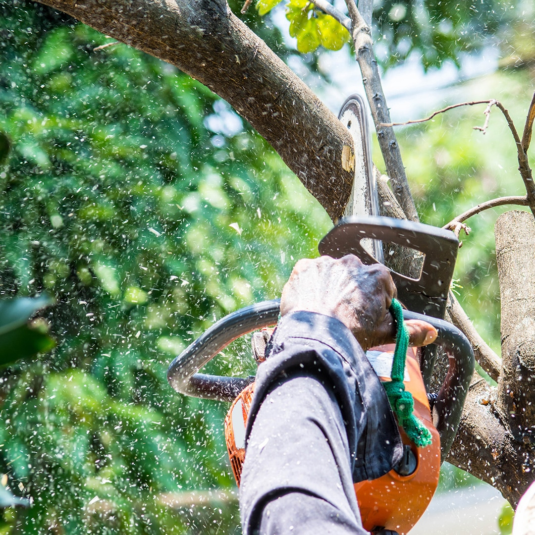 How Much Tree Trimming is Too Much | Elite Tree Care
