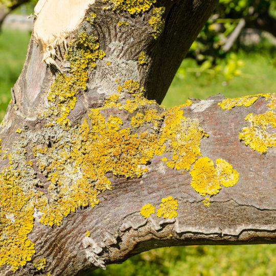 10 Types of Tree Disease