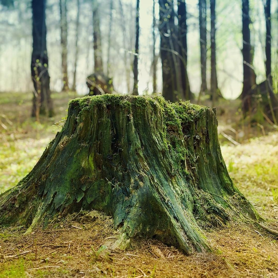 Tree Stumps Elite Tree Care