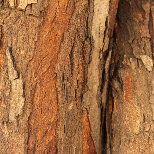 Peeling Tree Bark Causes