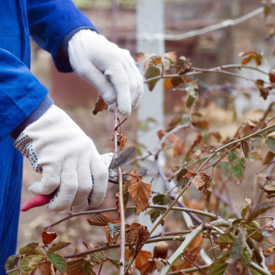 Winter Tree Pruning Tips for now and later
