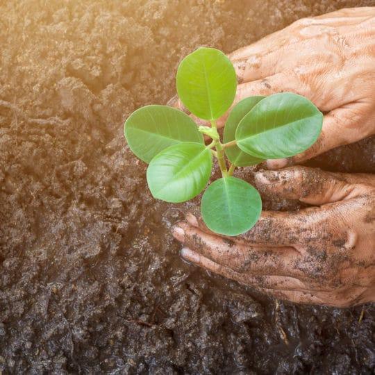 Professional Plant Care Benefits