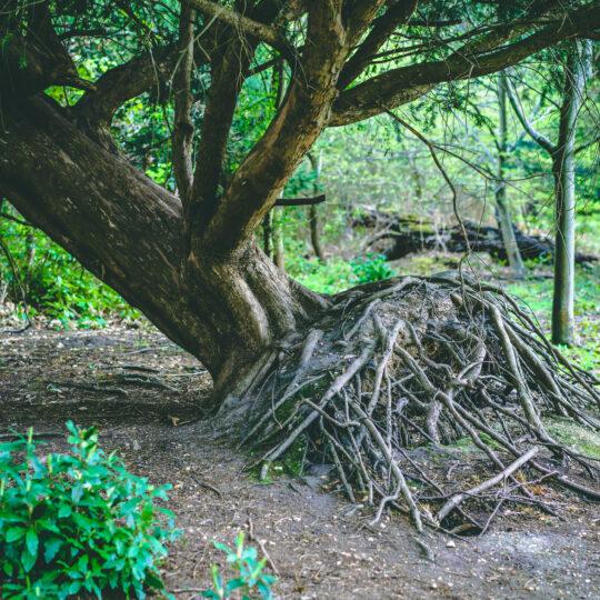 Treating Tree Problems