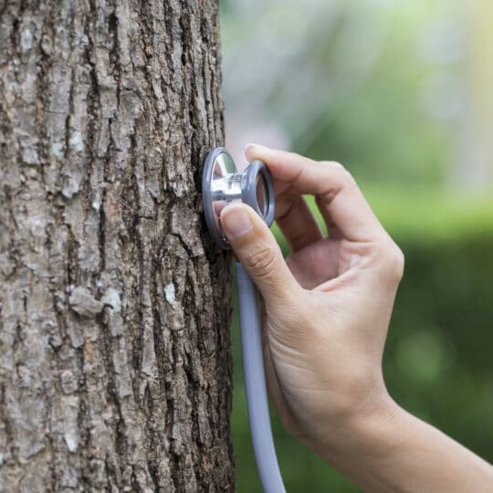 Tree Doctor Consultation